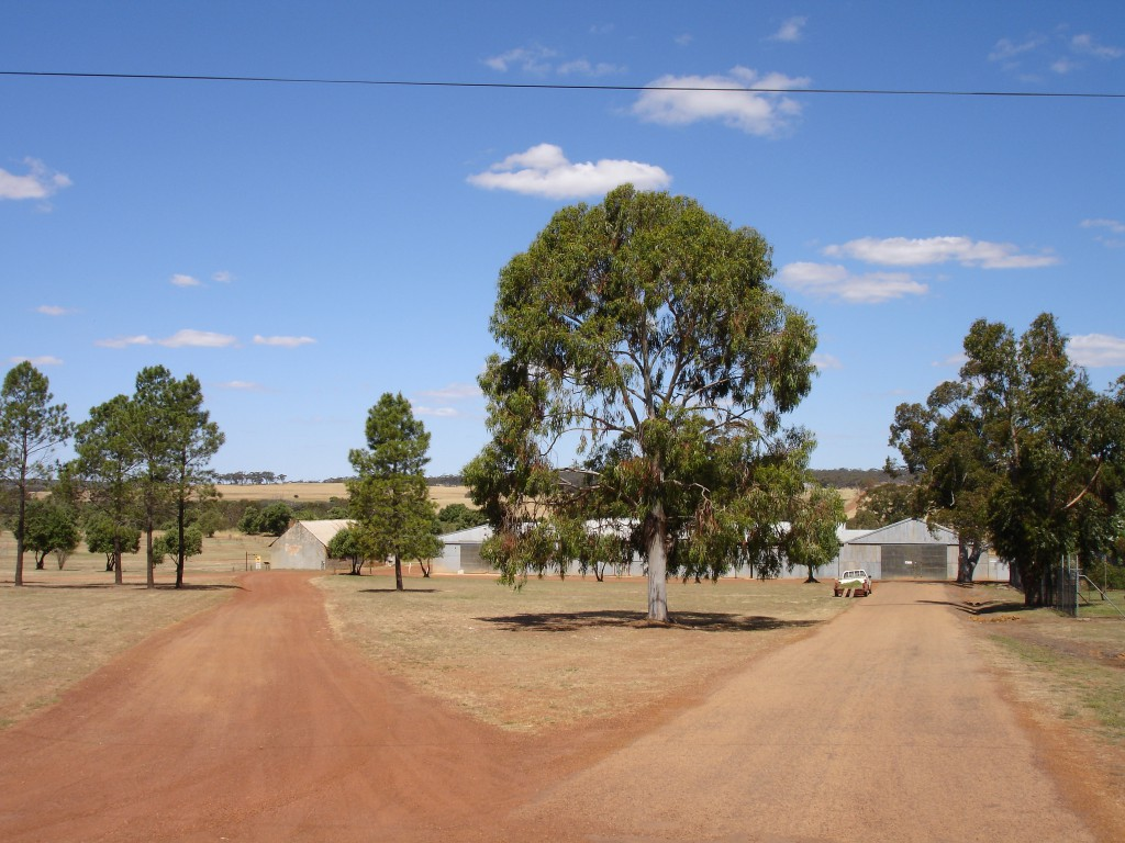 Fields at New Norcia