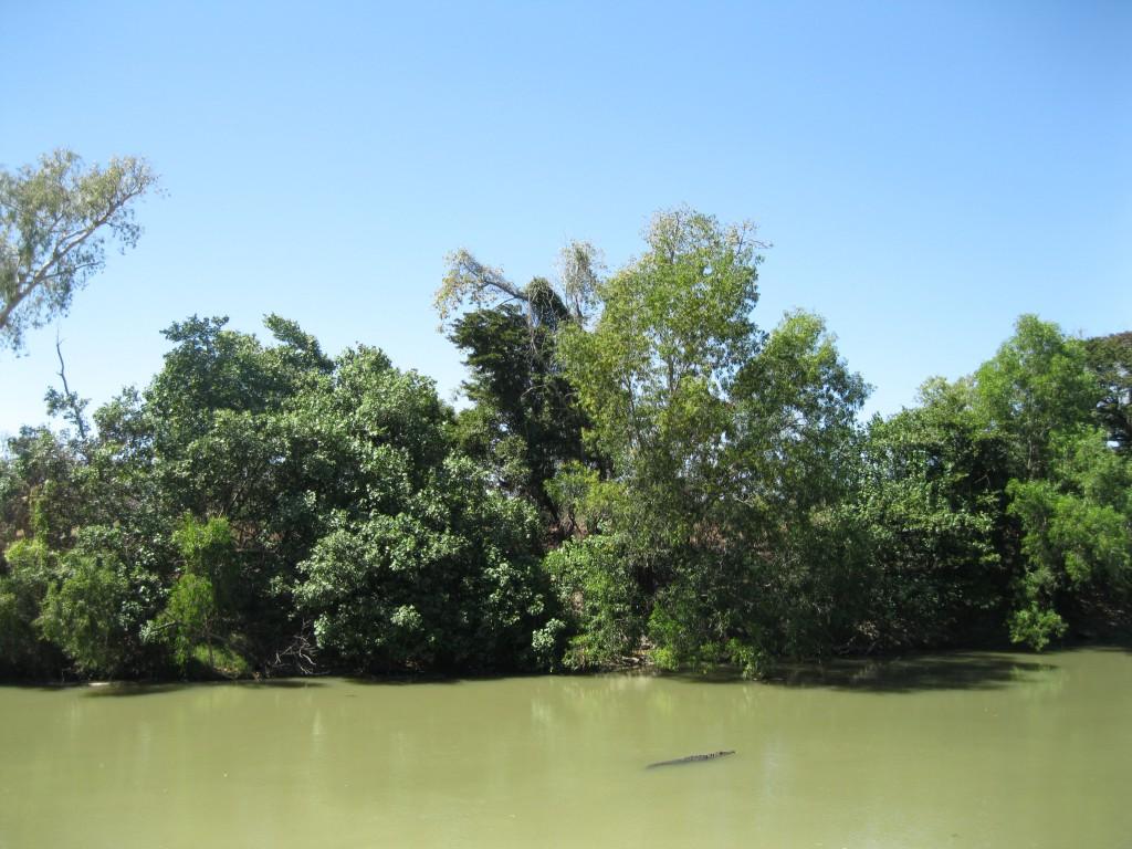 Estuarine Crocodile (Saltwater Crocodile) at East Alligator River