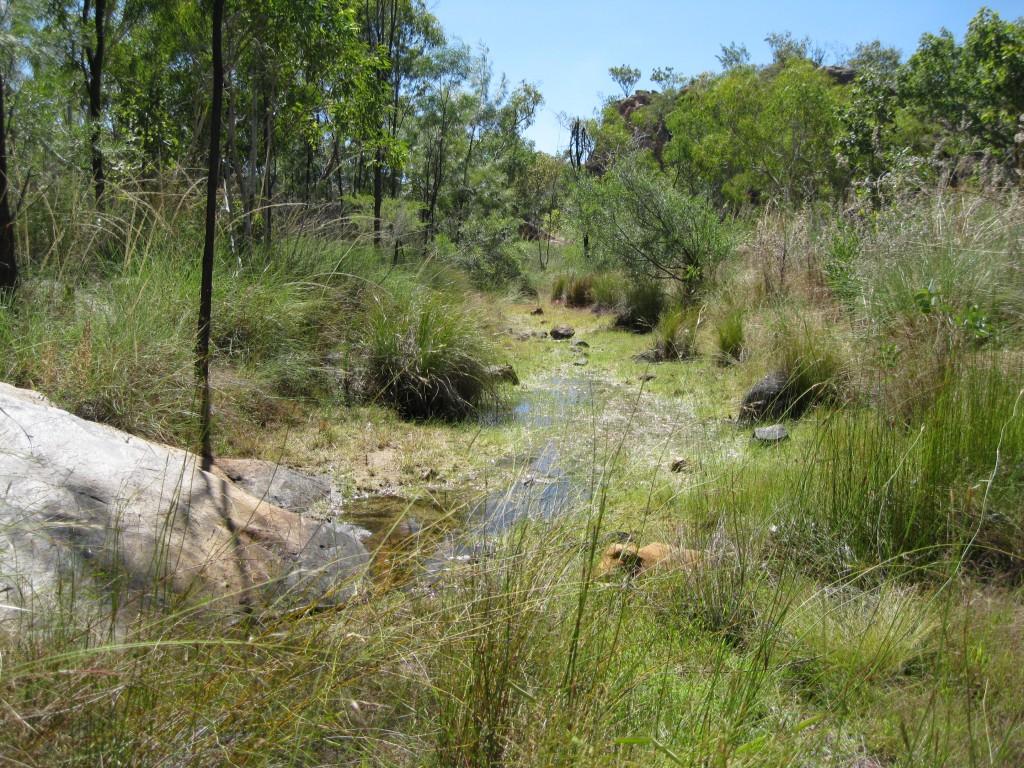 Savanna on the Leliyn Trail
