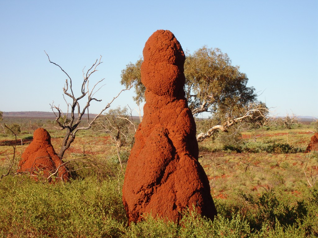 Termite Mound close to Hamersley Gorge