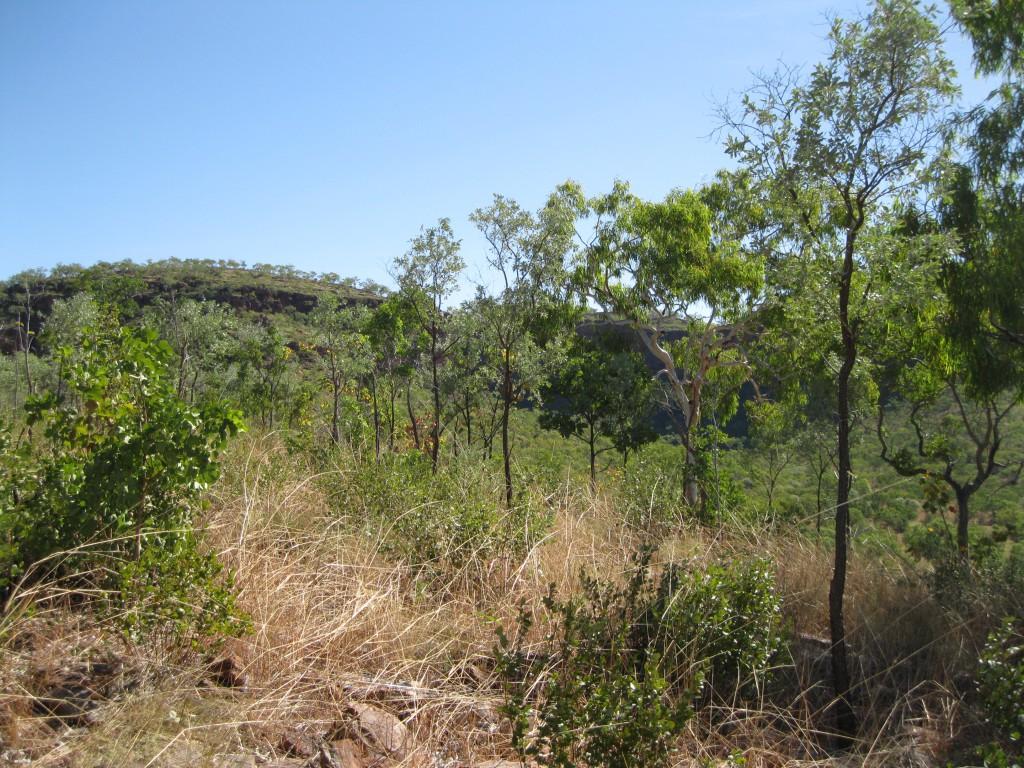 Bush and Grasslands going up the Escarpment Walk