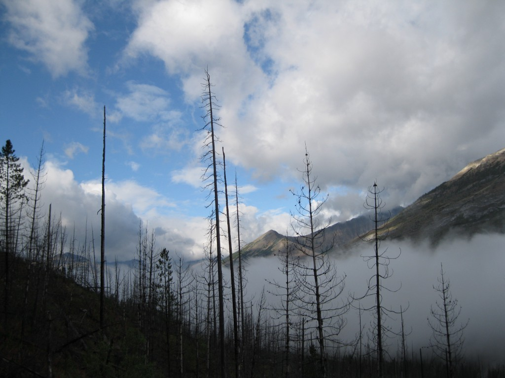 The Stanley Glacier Trail in the Mist