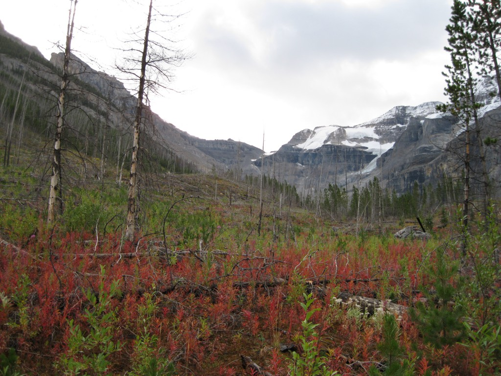 In the beginning of the Stanley Glacier Trail - facing the valley