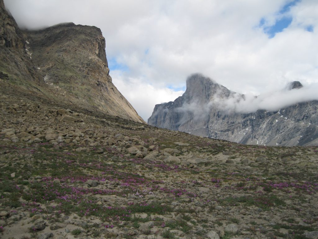 Mount Thor and Dwarf Fireweed