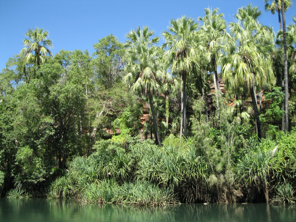 Lower Gorge and Livistona Palm Trees in the fringe