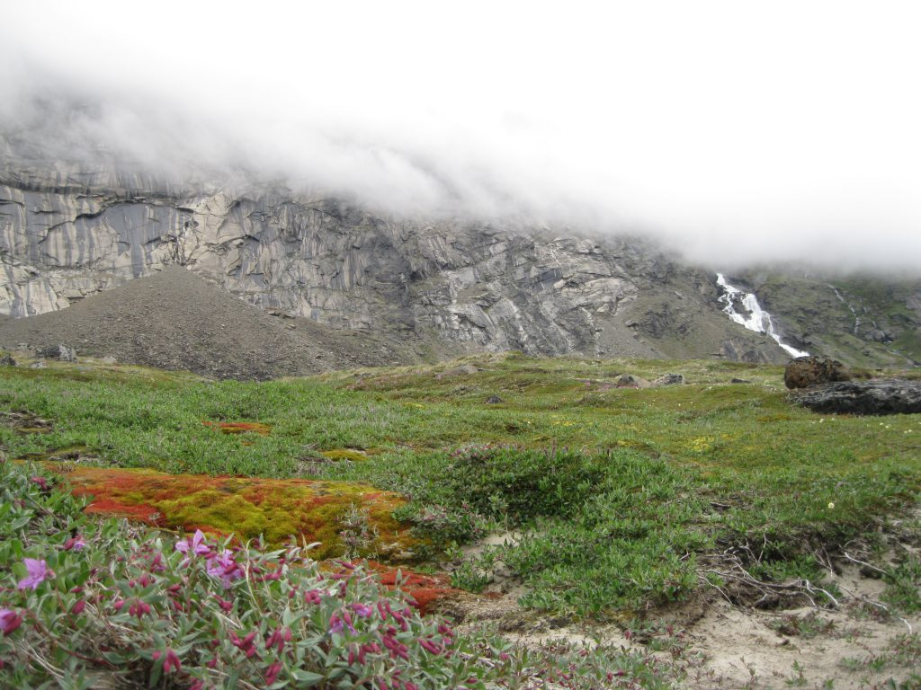 Schwarzenbach Falls in the mist fronted by Dwarf Fireweed and Red & Green Moss