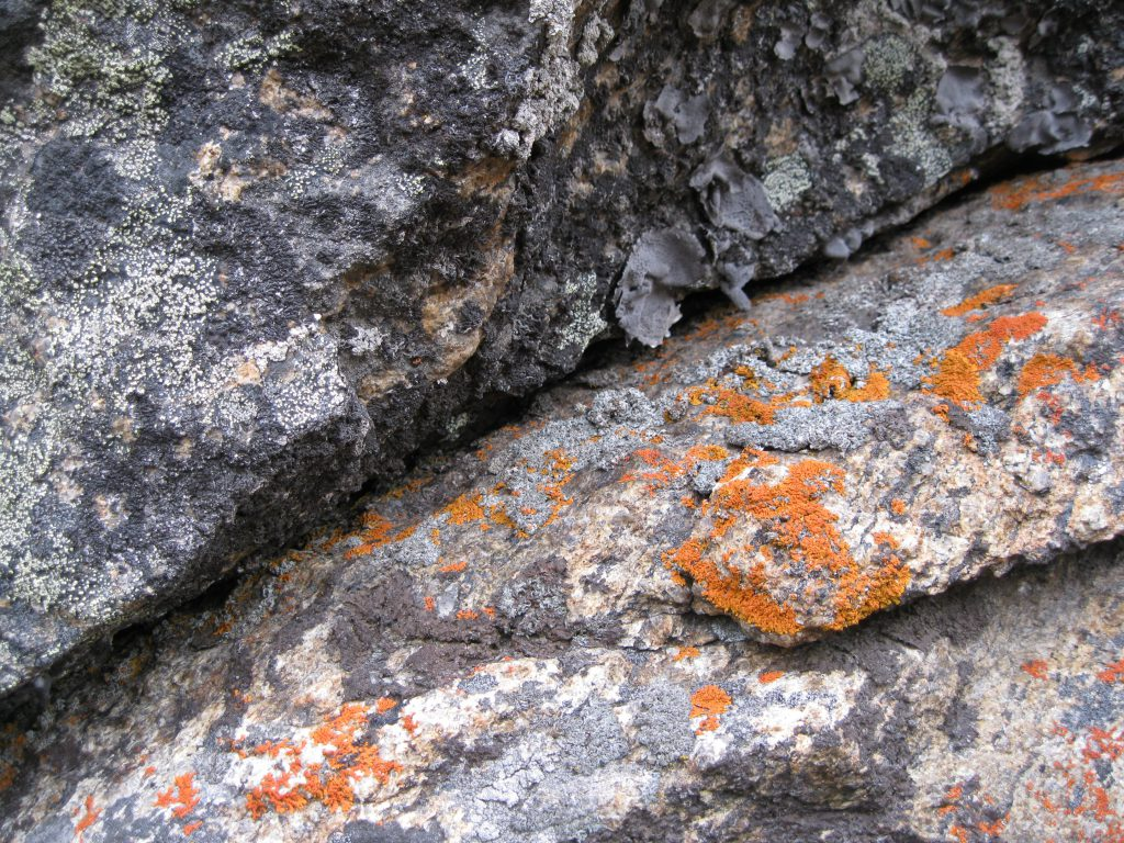 "Lichen on the Rocks at ""The Crib"""